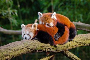 pandasでグループ別に統計量やヒストグラムを表示する方法